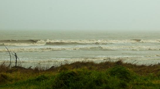 brown surf