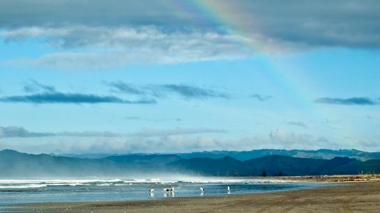 seagulls and rainbow