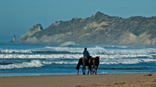 horses & waves