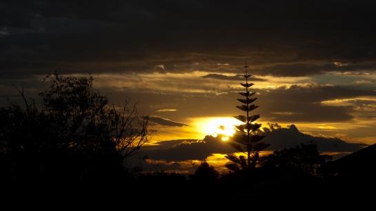 pine tree glow