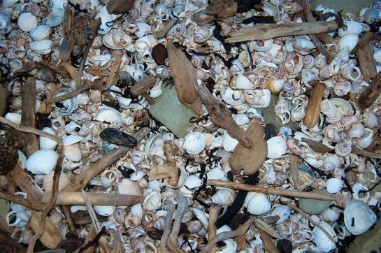 shells & sticks