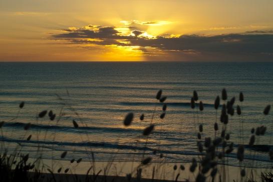 Bunnytail sunrise