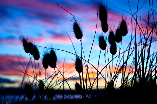 Bunnytail sunset_5348 copy