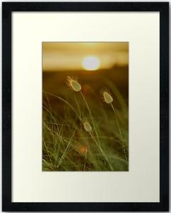 framed Bunnytails