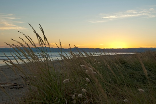 sunset grass_med 0028